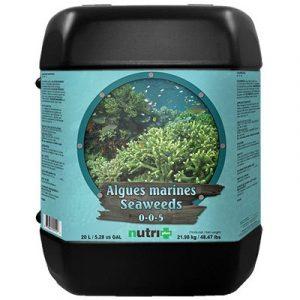 Les algues marines, riches en hormones naturelles et en oligo-éléments sont employées en agriculture depuis des dizaines d'années pour: • La croissance des racines. • La formation des pousses et des branches. • La production de chlorophylle. L'e