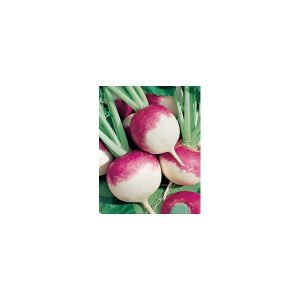 Nom du produit: Cerise De Terre Nom latin: Physalis peruviana Description variété: JARDINIER URBAIN. Variété de cerises de terre plus compacte, parfaite pour la culture en pot. Les petits fruits (11 à 14 mm) tiennent sur des branches bien ramifiées à en