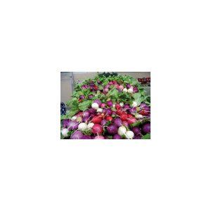 Nom du produit: Radis Nom latin: Raphanus sativus Description variété: Variété hâtive. Radis rond, de couleur rouge brillant, au goût exquis. Maturité (jours): 21 Couleur: Rouge brillant Forme Fruit: Ronde Horti-truc: PLANTATION: Semer les rad