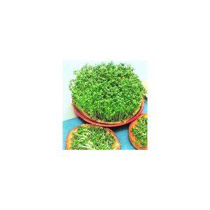 Nom du produit: Cresson de fontaine Nom latin: Nasturtium officinale Description variété: Ce cresson à feuilles larges, typiquement européen, est délicieux en salades. Il est riche en minéraux et vitamines, particulièrement en vitamine C. Les semences s