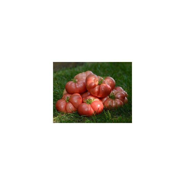 Nom du produit: Tomate - rose Nom latin: Solanum lycopersicum Description variété: Très gros fruit, charnu, en forme de coeur. Collet vert. Un délice. Port plant: Indéterminé Maturité (jours): 100 Grosseur Plant: Très large Poids Fruit: 300-350 g