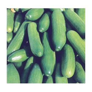 Nom du produit: Concombre Type Anglais Nom latin: Cucumis sativus Description variété: Ce concombre digestible, de type européen, a un bon goût, non amer. Variété à pollinisation ouverte. Maturité (jours): 65 Dimension fruit (cm): 38-45 x 4,5 H