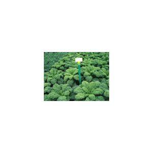 Nom du produit: Chou - Kale Nom latin: Brassica oleracea sabauda Description variété: Voici un chou kale bleu très foncé qui a un port en rosette qui simplifie la récolte. Black Magic est sucré, a une repousse vigoureuse et une bonne uniformité. Il rési