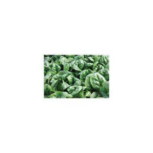 Nom du produit: Cresson frisé Nom latin: Nasturtium officinale Description variété: Sélection très vigoureuse. Lente à la montaison. Facile à cultiver. Maturité (jours): 20 Couleur feuillage: Vert Horti-truc: CULTURE : Il est recommandé de fair