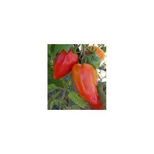 Nom du produit: Tomate - rouge Nom latin: Solanum lycopersicum Description variété: JARDINIER URBAIN. Une tomate Beefsteak hâtive, au plant vigoureux et ouvert, facile à cultiver. Ses fruits ronds, d'un beau rouge foncé, sont excellents. Port plant: In