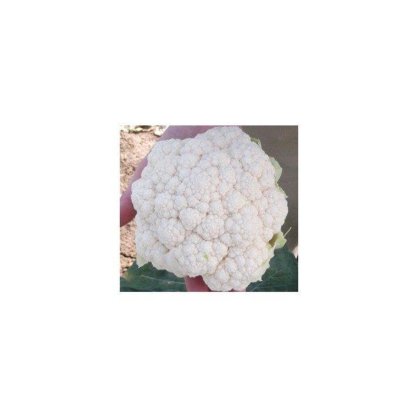 Nom du produit: Chou-fleur Nom latin: Brassica oleracea botrytis Description variété: Fioretto est un nouveau chou-fleur à longues tiges vertes que l'on récolte en bâtonnets. Il est plus sucré et sa texture est plus douce que celles d'un chou-fleur trad