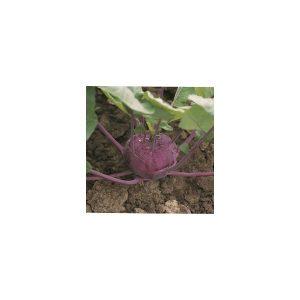 Nom du produit: Brocoli Nom latin: Brassica oleracea cauliflora Description variété: Une variété hâtive qui a un plant très compact et une tête en forme de dôme vert moyen. Elle offre une bonne tolérance à la chaleur. Maturité (jours): 75 Saison de
