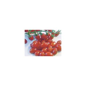 TOMATE MINI ITALIENNE HYB. LITTLE NAPOLI-0
