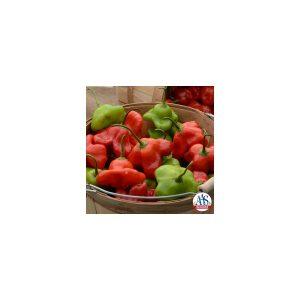 Nom du produit: Poivron doux Nom latin: Capsicum annuum Description variété: Piment de type italien dont les fruits sont lisses, de forme conique, au bout pointu. Piment à griller idéal, il peut également être utilisé pour faire des marinades. Matur