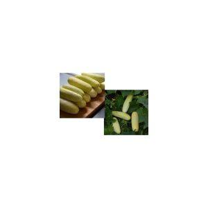 """Nom du produit: Concombre de spécialité Nom latin: Melothria scabra Description variété: Tout petit concombre (Melothria scabra) connu au Mexique sous le nom de """"petit melon d'eau"""" et renommé ici Mouse Melon (melon de souris). Les fruits ont un goût mar"""