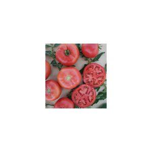 Nom du produit: Tomate - rose Nom latin: Solanum lycopersicum Description variété: Cette nouvelle tomate, créée par le croisement des deux variétés ancestrales, est une nouvelle tomate beefsteak rose. Certaines caractéristiques: sa hâtivité et un meille