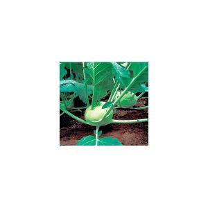 Nom du produit: Chou-rave Nom latin: Brassica oleracea gongylodes Description variété: JARDINIER URBAIN. Cet hybride, de couleur pourpre et à chair blanche, produit des bulbes ronds, quelque peu aplatis, avec des tiges moyennes. Haut rendement et un feu