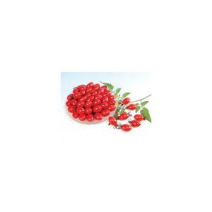 Nom du produit: Tomate - raisin Nom latin: Solanum lycopersicum Description variété: JARDINIER URBAIN. Petite tomate raisin sucrée et bien goûteuse de type ''Santa''. Plant vigoureux offrant un rendement élevé. Port plant: indéterminé Maturité (jou