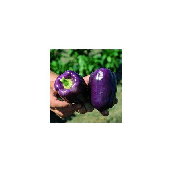Nom du produit: Poivron doux Nom latin: Capsicum annuum Description variété: Takara est un petit piment doux Shishito typique, à saveur douce et riche. Il peut produire 5 à 10 % de fruits plus piquants ou âcres en période de stress climatique tels que l