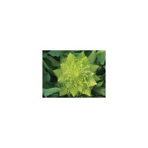 Nom du produit: Chou-fleur Nom latin: Brassica oleracea botrytis Description variété: Voici enfin un chou-fleur biologique de qualité! Sa tête est bien dômée, très blanche et bien protégée par un feuillage dense. Recommandé pour récolte tout au long de