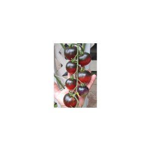Nom du produit: Tomate - pourpre Nom latin: Solanum lycopersicum cerasiforme Description variété: Une tomate pourpre au goût riche et sucré. Variété robuste de type Beefsteak issue du croisement de Cherokee Purple X Carbon. Port plant: indéterminé