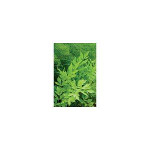 Nom du produit: Lavande Nom latin: Lavandula vera Description variété: Une lavande en version hâtive et plus compacte. (Vivace) Étalement: 60 cm Hauteur plant: 30 cm Horti-truc: Germination : de 14 à 20 jours. Le feuillage de couleur gris-vert,