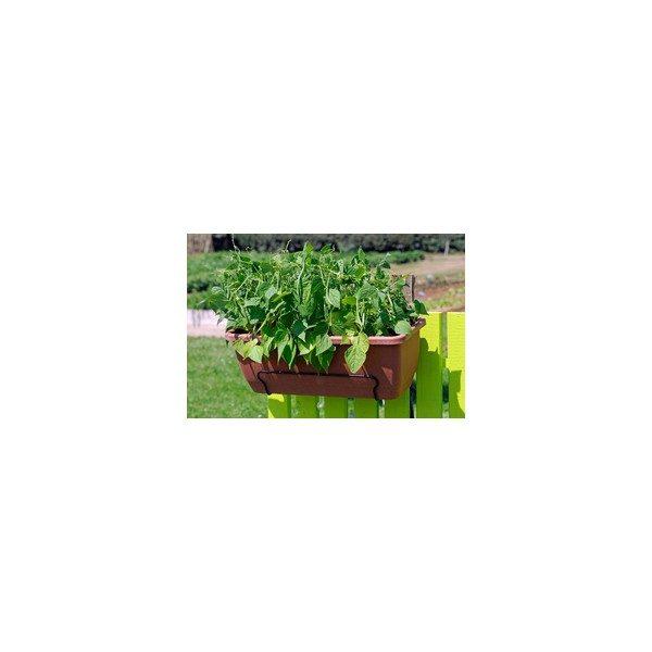 Nom du produit: Haricot nain vert Nom latin: Phaseolus vulgaris Description variété: Les haricots se consomment frais, en conserves et peuvent aussi être congelés. Maturité (jours): 60 Couleur: Bleuté Forme Fruit: Ronde Grosseur: Moyen Longueur