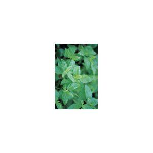 Nom du produit: Livèche Nom latin: Levisticum officinalis Description variété: Les feuilles ressemblent étrangement à celles du céleri. Ajoute du goût à vos plats préférés. Saupoudrez les graines sur les viandes, dans les soupes, sur les bonbons, etc. U