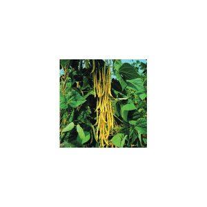 Nom du produit: Haricot nain vert Nom latin: Phaseolus vulgaris Description variété: JARDINIER URBAIN. Gagnant AAS 2014. Grâce à son plant compact, Mascotte se cultive très bien en jardinière ou en pleine terre. Peu importe où vous le sèmerez, la récolt