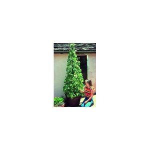 Nom du produit: Haricot grimpant Nom latin: Phaseolus vulgaris Description variété: JARDINIER URBAIN. Voici un haricot grimpant vigoureux, facile à faire pousser et qui offre un très bon rendement tout au long de sa croissance. Mettez 3 semences dans un