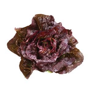 Nom du produit: Laitue Mesclun Nom latin: Lactuca sativa Description variété: JARDINIER URBAIN. Typiquement européen. Une sélection des meilleures variétés de laitues en feuilles de différentes maturités, couleurs et formes. Cueillir les feuilles lorsqu
