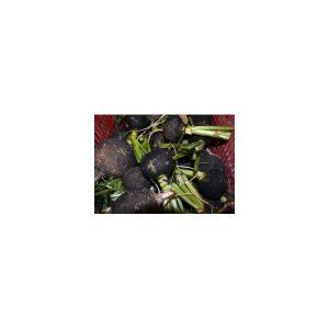 Nom du produit: Radis Nom latin: Raphanus sativus Description variété: JARDINIER URBAIN. Ces racines de couleurs variées, blanc, rose, violet et rouge, ajouteront de la couleur dans vos salades ou vos plats de crudités. Goût unique. Forme et maturité un