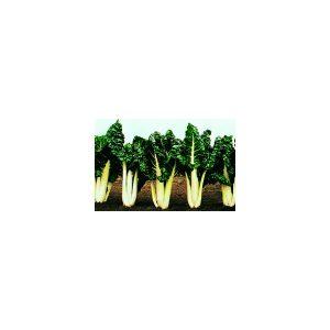 Nom du produit: Bette à carde Nom latin: Beta vulgaris Description variété: JARDINIER URBAIN. Pourcentage élevé de pétioles rouges, jaunes, orange et roses et peu de blancs. Elle est idéale pour ajouter de la couleur dans vos plats. Remplace la variété