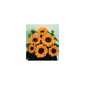 Nom du produit: Tournesol Nom latin: Helianthus annuus Description variété: Ce tournesol est particulier, car, en été, il produit des plants de 40-50 cm de haut, avec des branches latérales et des fleurs sans pollen. Cependant, on peut aussi le semer à