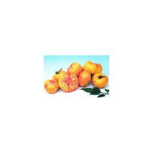 Nom du produit: Tomate - jaune Nom latin: Solanum lycopersicum cerasiforme Description variété: Variété populaire. Plant très productif. Fruit de couleur jaune clair. Saveur distincte, moins acide que les variétés aux fruits rouges. Port plant: indéter